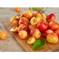 Blonde Rainier Cherries