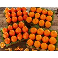 Honeybells and Grove Navel Oranges