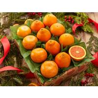 Holiday Citrus Club