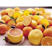 Season Supply Citrus Club Sampler Tray